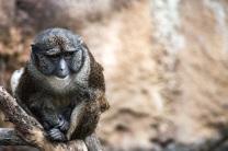 monkey-san-diego-zoo