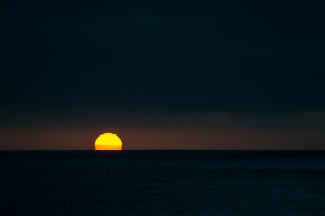 seals-sunset-9